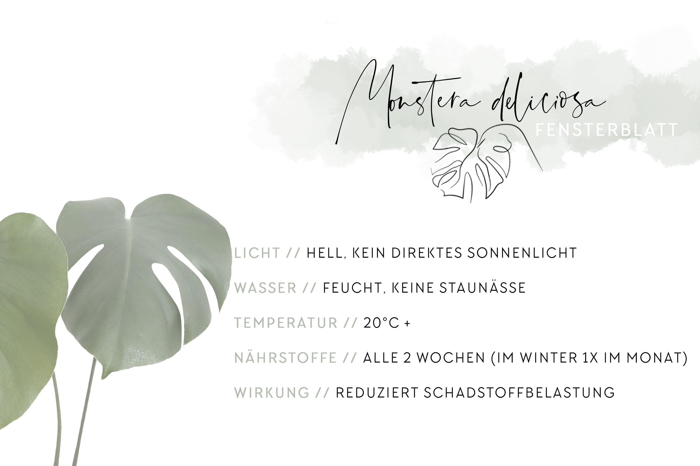 JO_and_JUDY_Office_Plants_04_de