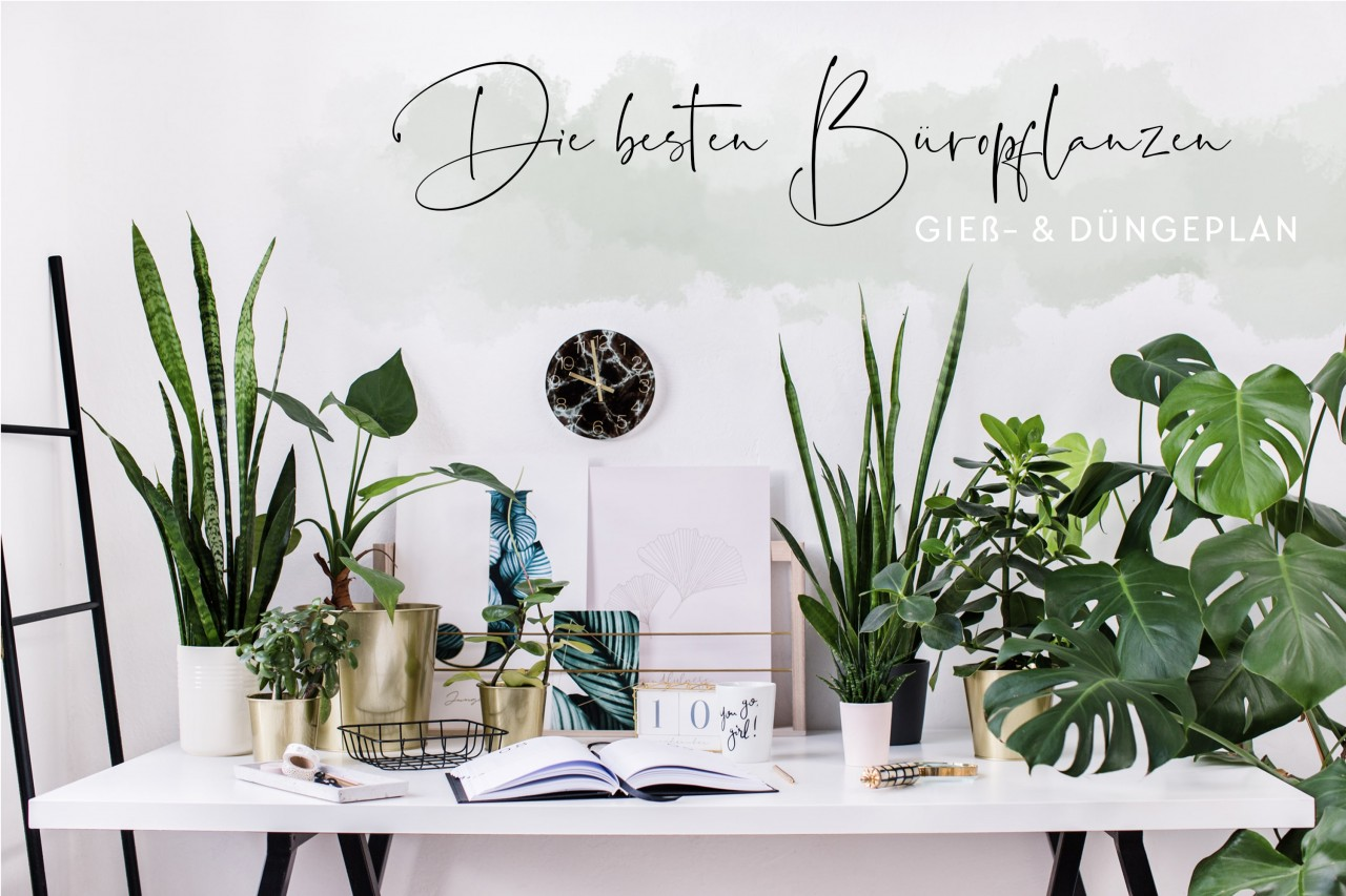 JO_and_JUDY_Office_Plants_01_dee8d7BocrM5A4T